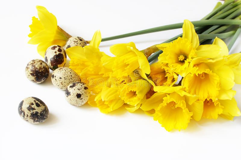 Easter, spring greeting card, invitation with quail eggs and yellow daffodils, narcissus flowers lying on white table stock photo