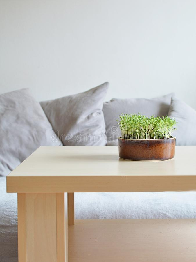 Spring still life with herbs in nordic styl stock photo