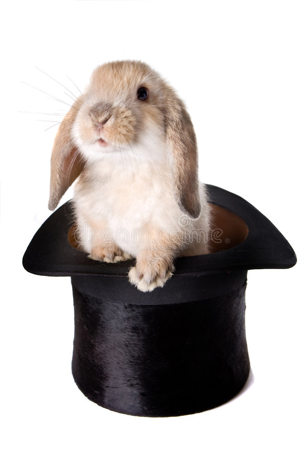 Easter surprise. Little easter lop rabbit in a magician's hat royalty free stock photo