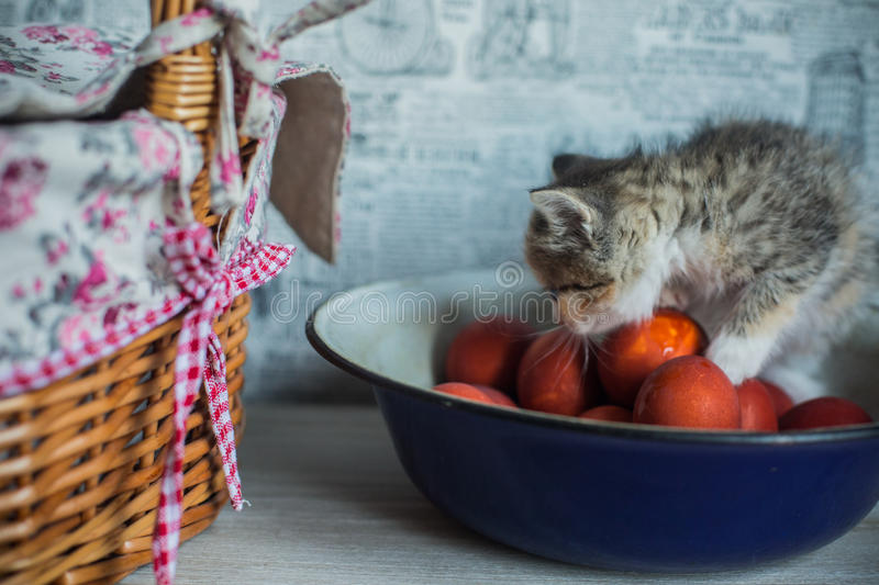 Easter theme kitten sitting in large woven cup and saucer stock photography