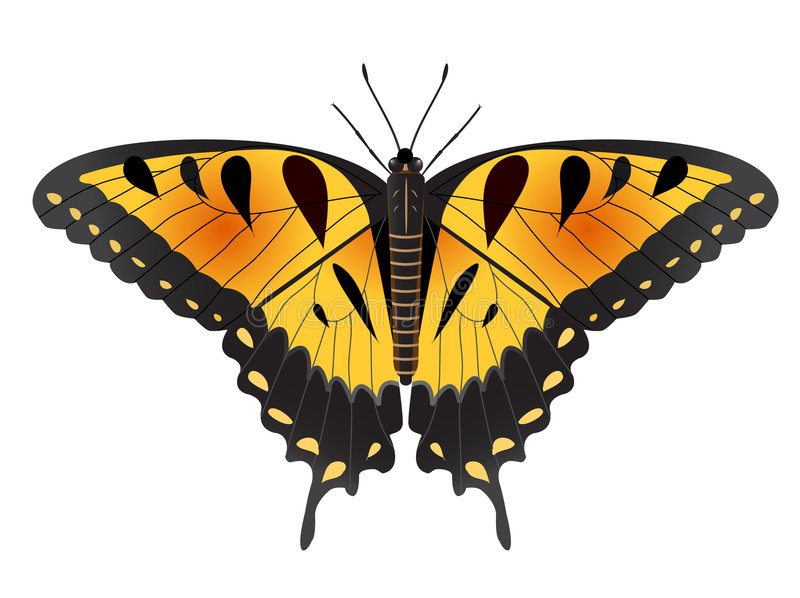 Easter Tiger Swallowtail Butterfly stock illustration
