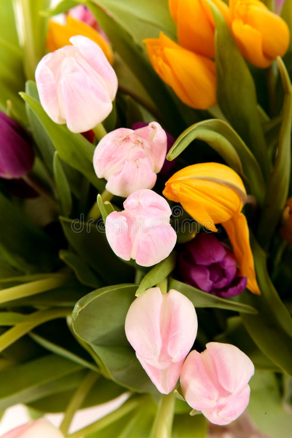 Download Easter tulips close up stock photo. Image of bouquet - 13419628
