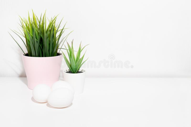 Easter white chicken eggs and green spring plants in flower pots on white table with copy space stock photo
