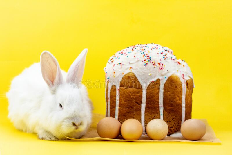 Easter white fluffy live rabbit with an Easter cupcake on a pastel yellow background royalty free stock image