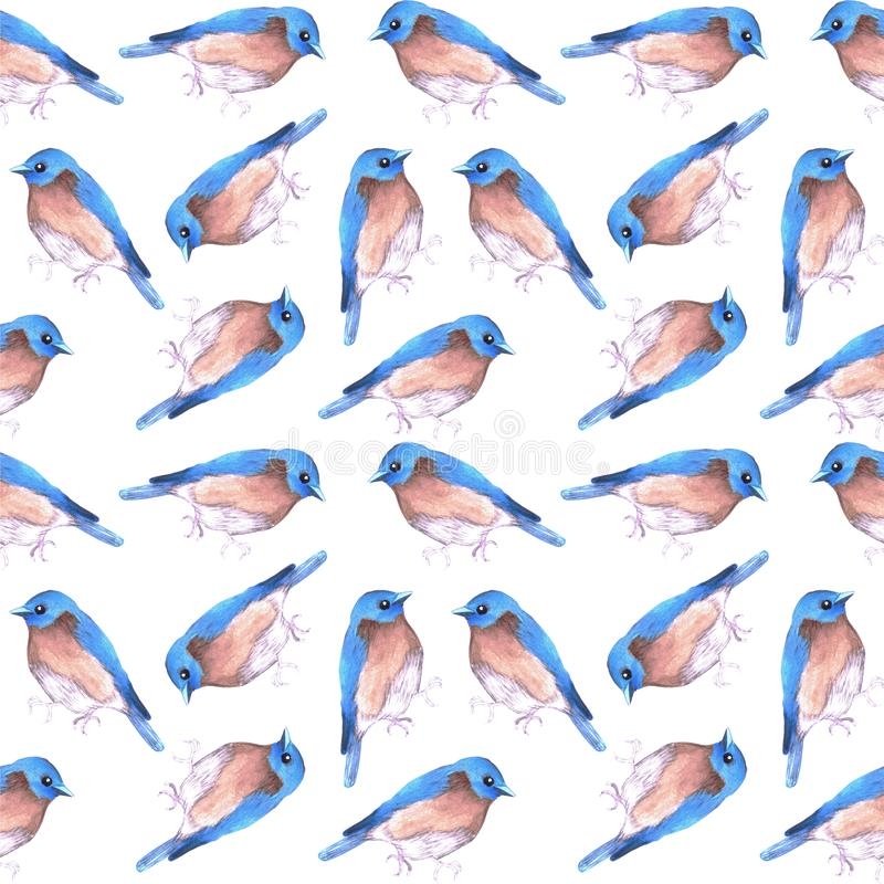 Eastern bluebird or Sialia sialis bird seamless watercolor birds painting background.  vector illustration