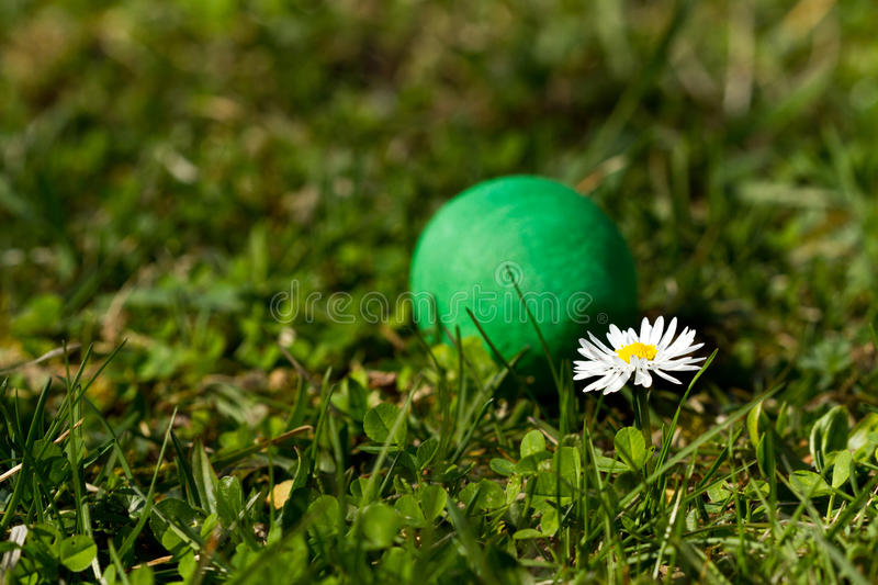 Eastern Egg. Lying in the grass stock images
