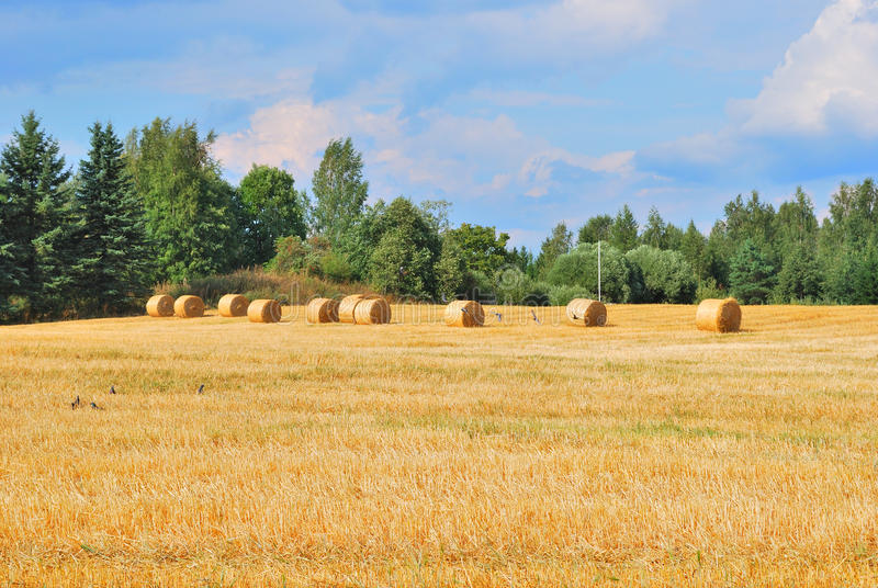 Eastern Finland Stock Photography
