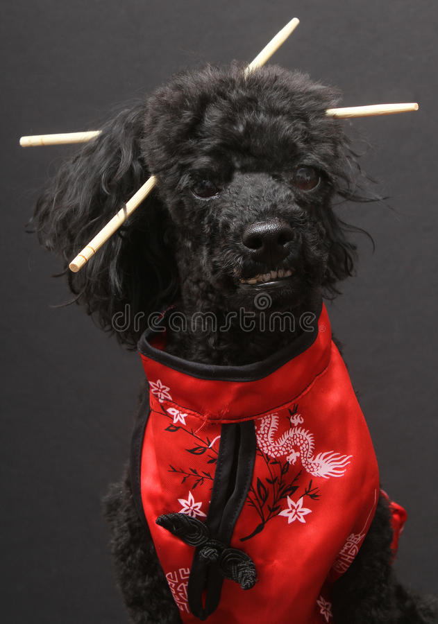 Download Eastern Inspired Dog With Chopsticks Stock Photo - Image: 18091430