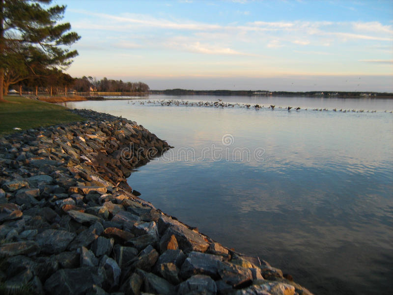 Eastern Shore Riprap royalty free stock image