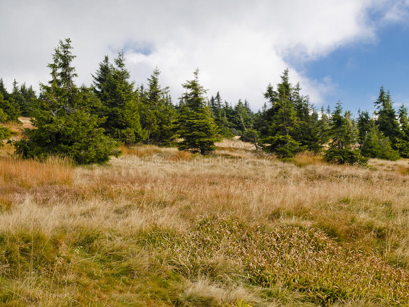 Eastern Sudetes, mountain range High Jeseník. High Ash Mountains is the second highest mountain range in the Czech Republic royalty free stock photo