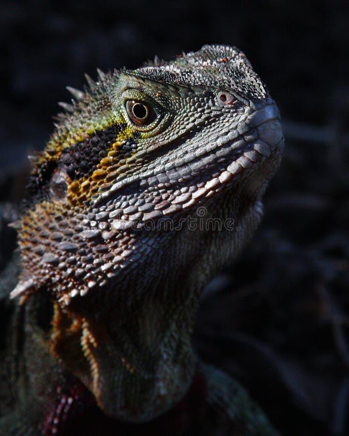 Free Eastern Water Dragon Stock Image - 21869641