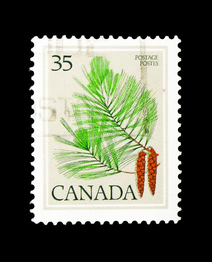 Eastern White Pine, Pinus strobus, Definitives 1977-79 (Leaves). MOSCOW, RUSSIA - MARCH 18, 2018: A stamp printed in Canada shows Eastern White Pine stock photography