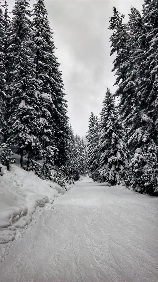 Easy ski slope in the forest. Easy ski slope after snowfall in Chepelare, Rhodope Mountains, Bulgaria. Perfect day outside in the nature royalty free stock photos
