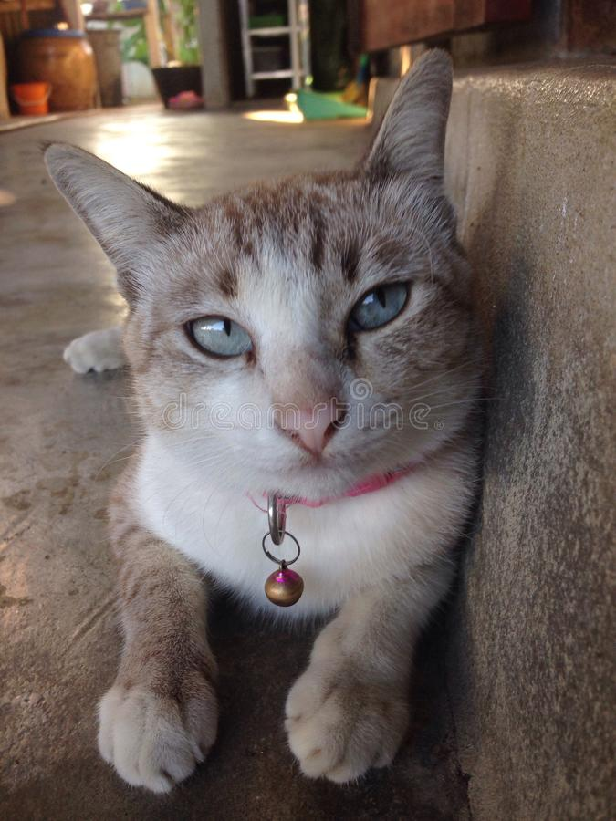 C cat royalty free stock image
