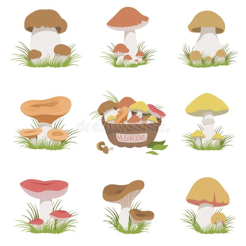 Eatable Mushrooms Realistic Drawings Set stock illustration