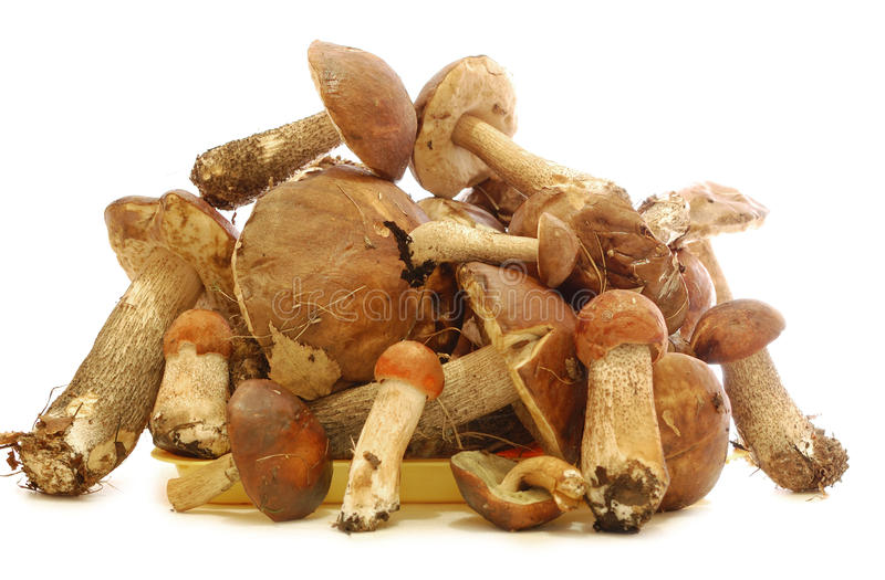 Eatable Pilze lizenzfreie stockfotografie