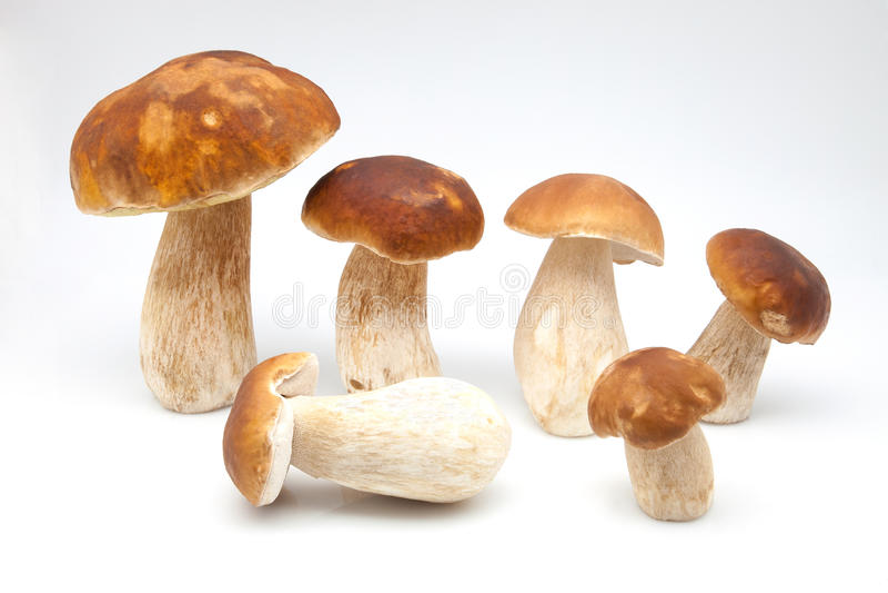 Eatable Pilze lizenzfreie stockfotos