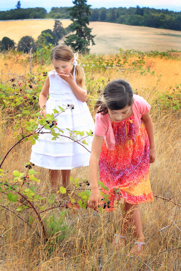 Eating Blackberries. Two little girls in nice dresses in a field of tall grass picking and eating blackberries. Shallow depth of field stock photos
