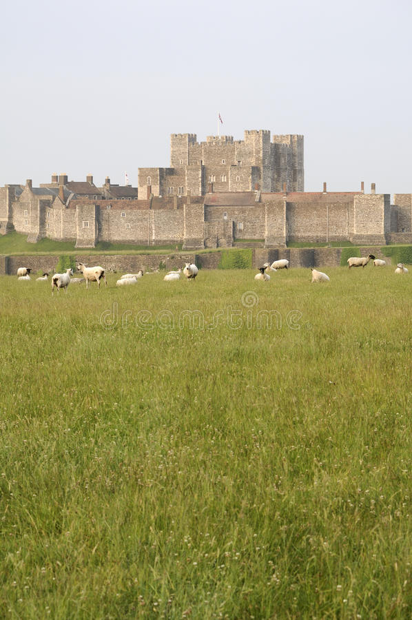 eating grass near castle royalty free stock photography