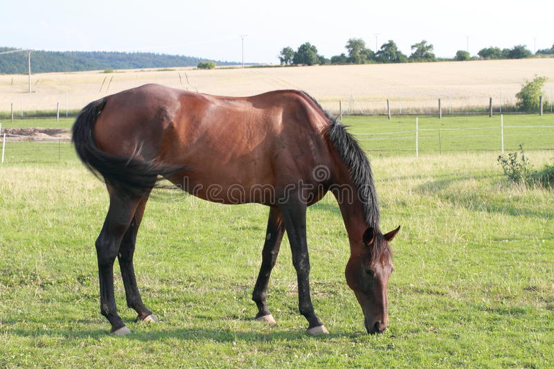 Eating horse stock images