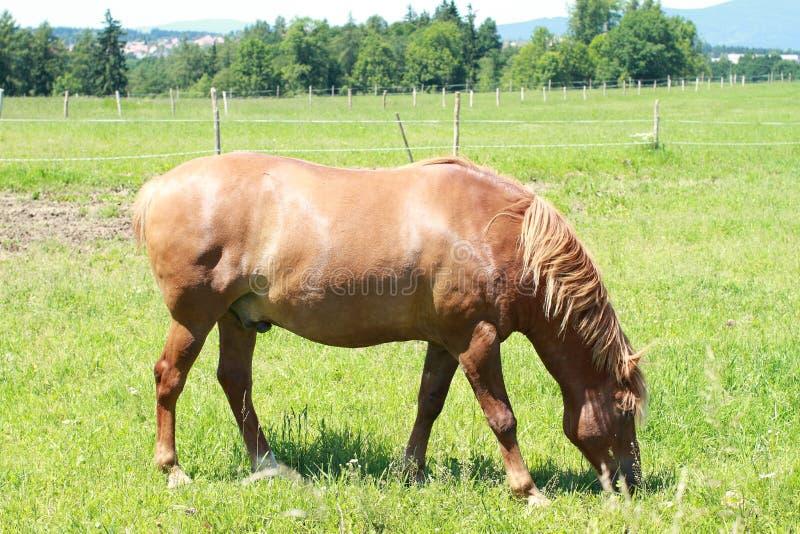 Eating horse stock photos