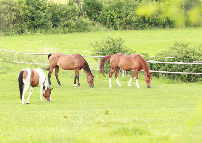 Eating horses stock photography