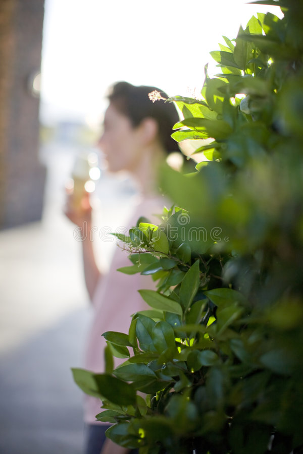 Eating ice cream. Young woman eating ice cream cone behind green bush stock photography