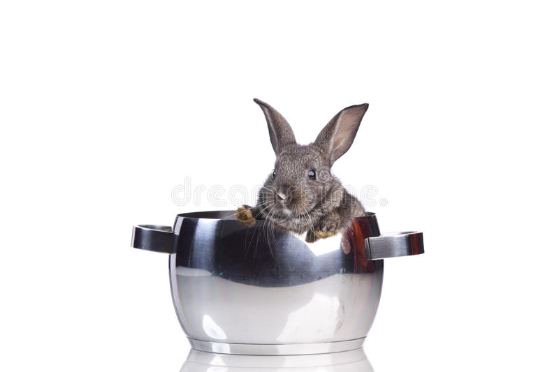 Eating Rabbit Meat Royalty Free Stock Photography