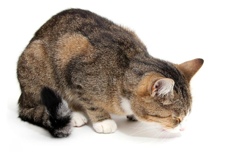 Download Eating small cat stock image. Image of eyes, small, observe - 21762271