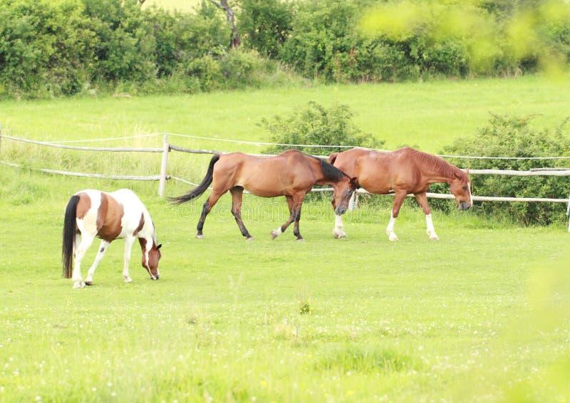 Eating and walking horses royalty free stock photos