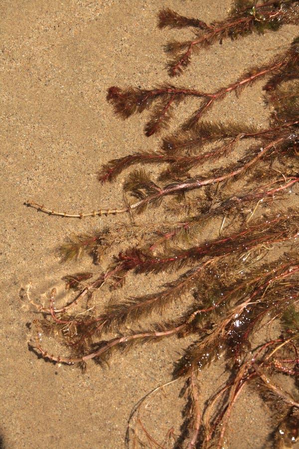Eau-centrale sur le fond de sable photographie stock libre de droits