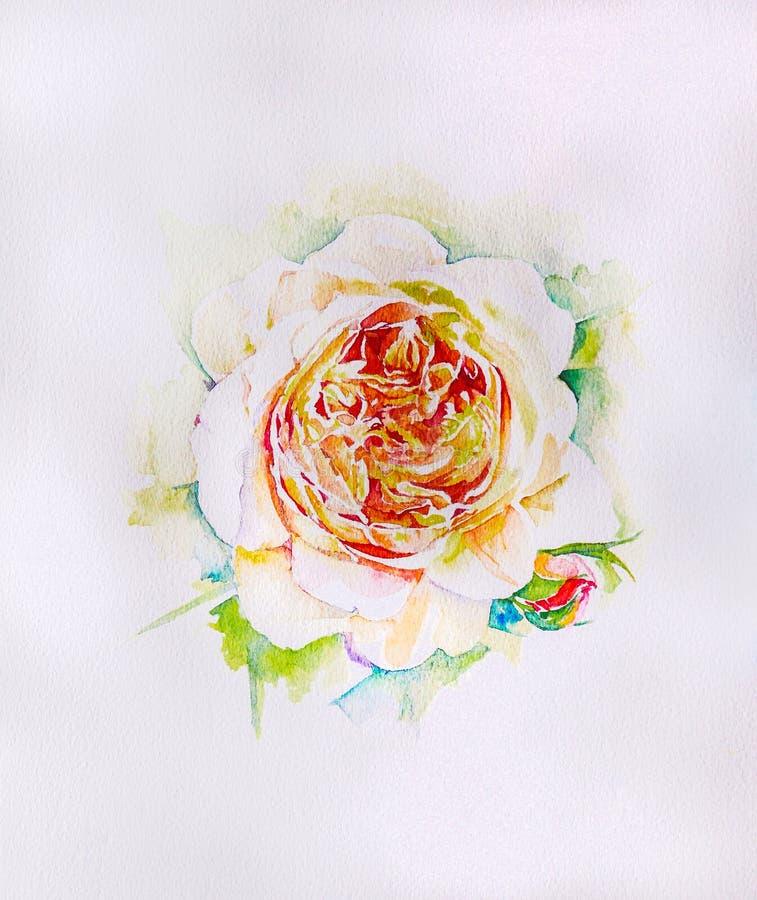 Eau-couleur de peinture de main de temps rose de fleur au printemps images stock