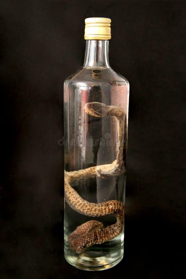 Eau-de-vie fine de serpent (berus de vipera) images stock