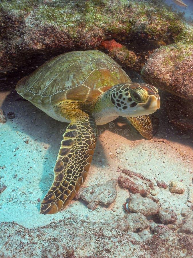 Eau du fond Ceará, Brésil de tortue de mer images libres de droits