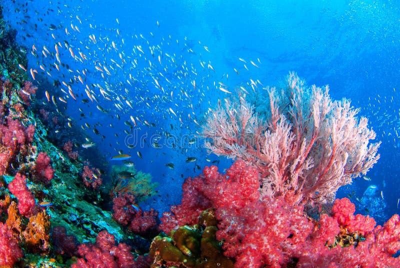Eau du fond et coraux et poissons merveilleux photographie stock libre de droits