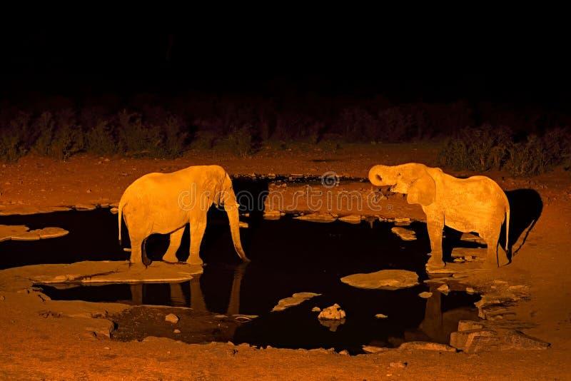 Eau potable d'éléphant la nuit, Etosha NP, Namibie en Afrique Animal sauvage sur le pr? vert Nature de faune sur le safari africa photographie stock libre de droits