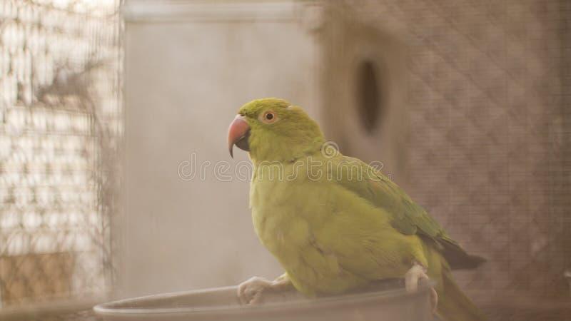 Eau potable d'oiseau image libre de droits