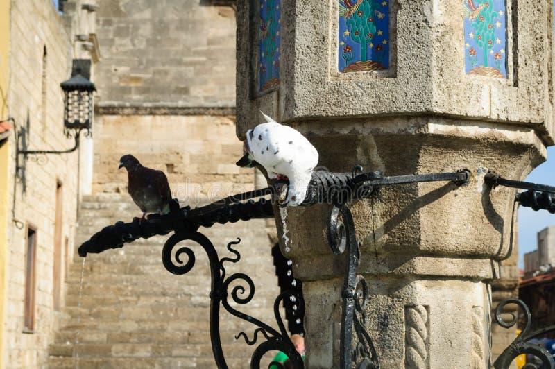 Eau potable de colombe blanche de la fontaine, Grèce images libres de droits