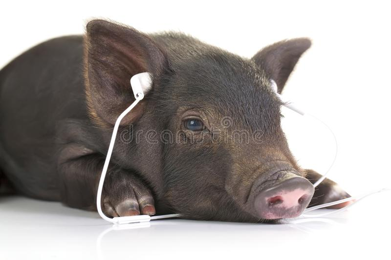 Eazy listening royalty free stock photography