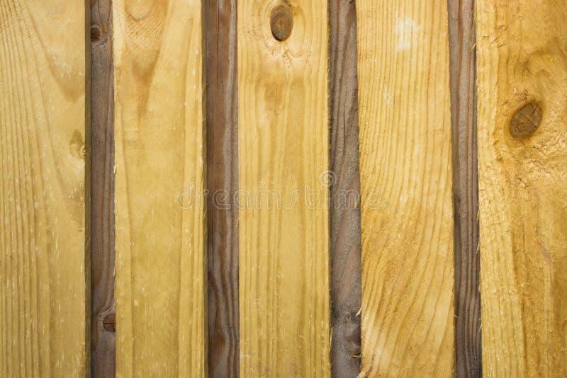 Ebano o giallo orlato del bordo, asciutto, fondo fotografia stock