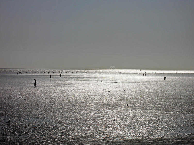 Download Ebb in the North Sea stock photo. Image of gulls, schleswig - 10617534
