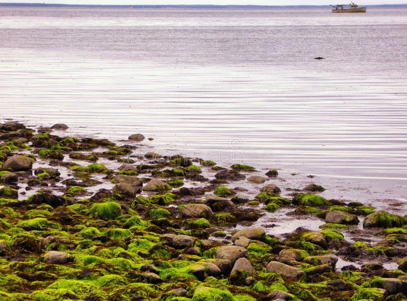 Ebbe am Silber versandet Nationalpark in Milford stockfoto
