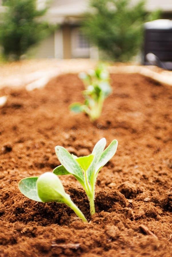 Eben gepflanzter Garten stockfoto
