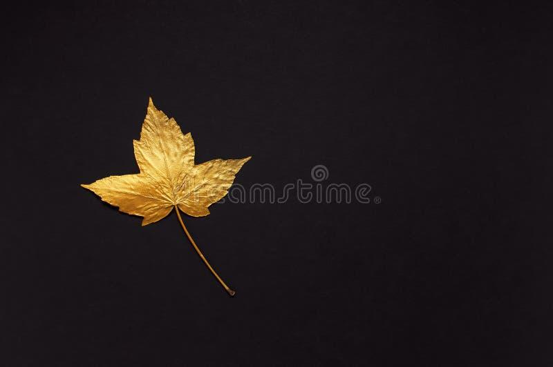 Ebene gelegte kreative Herbstzusammensetzung Goldenes Ahornblatt auf schwarzem Draufsicht-Kopienraum des Hintergrundes Fall-Konze stockbild
