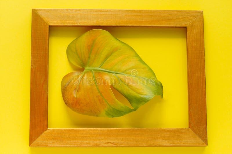 Ebene gelegtes mehrfarbiges monstera tropisches Blatt im goldenen Rahmen lokalisiert auf gelbem Hintergrund stockfotografie