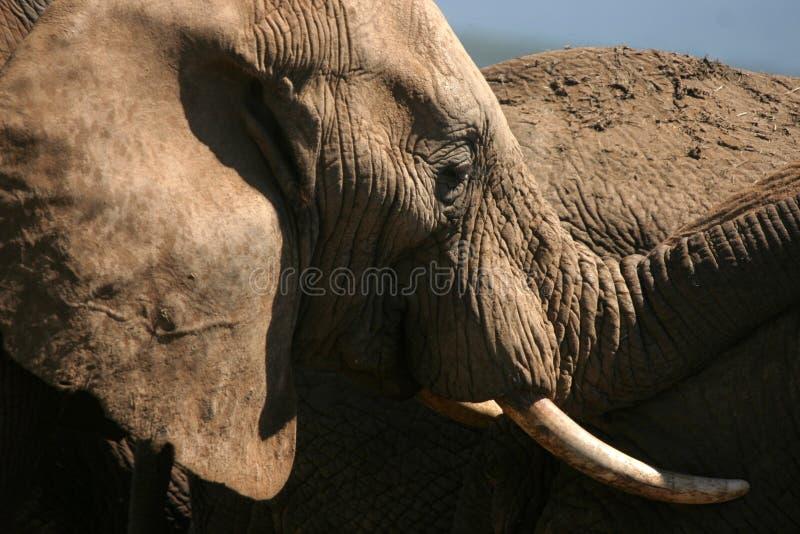 Ebony & Ivory stock images