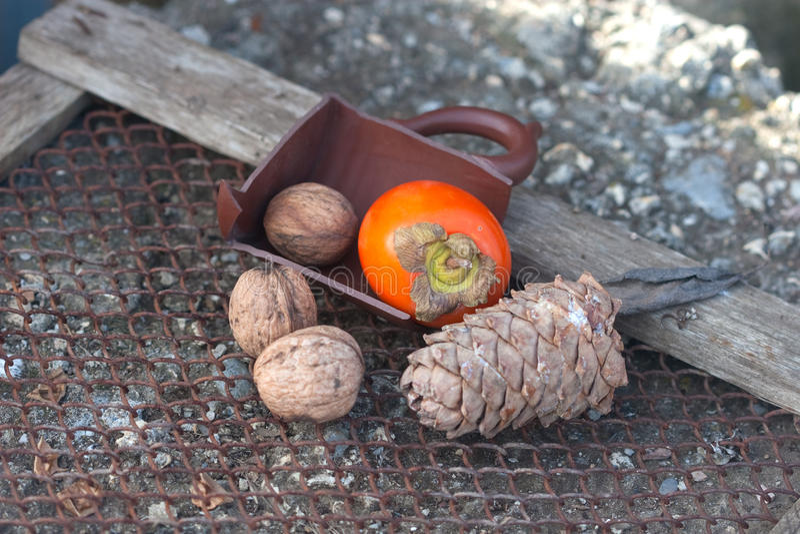 Ebony, walnut, fir cone royalty free stock photography