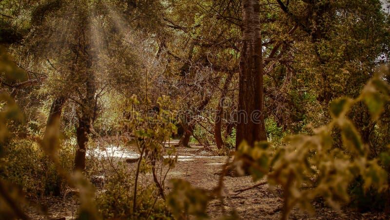 Ebro riverbank grove royalty free stock photos