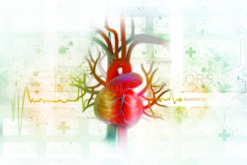 ECG-bakgrund med mänsklig hjärta stock illustrationer