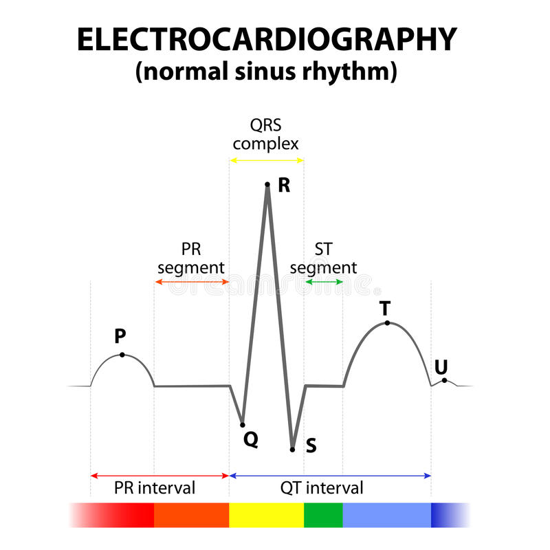 ECG of a heart in normal sinus rhythm. Schematic representation. wave and segment names royalty free illustration